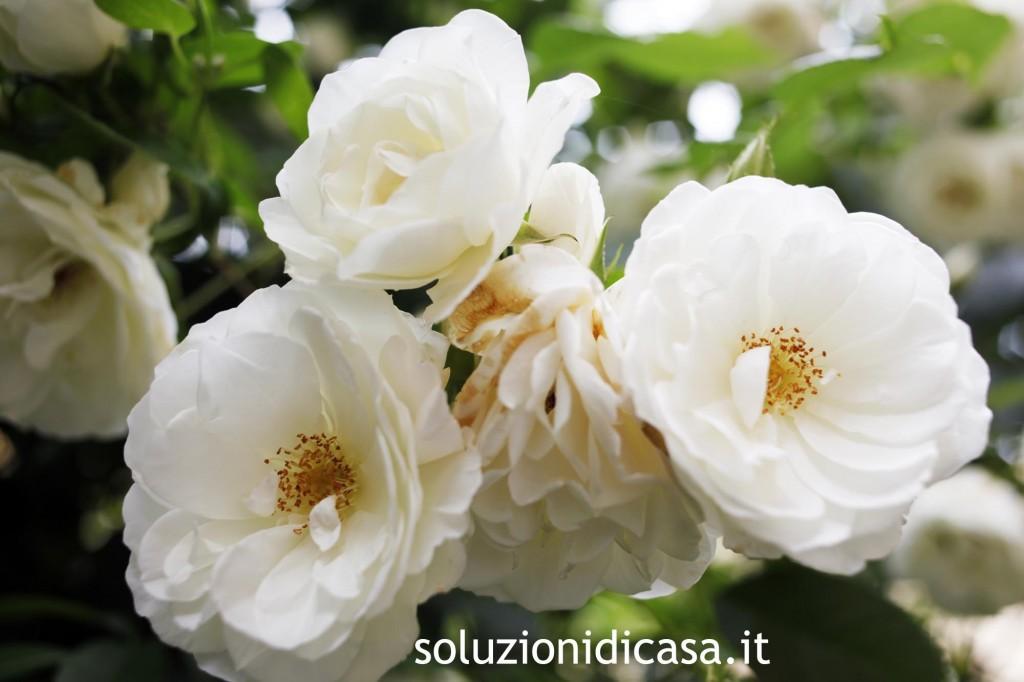 Fiori da giardino perenni soluzioni di casa - Piante x giardino ...