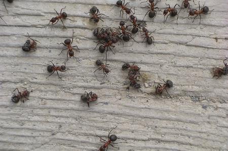 Come allontanare le formiche in modo naturale soluzioni di casa - Come debellare le formiche in casa ...