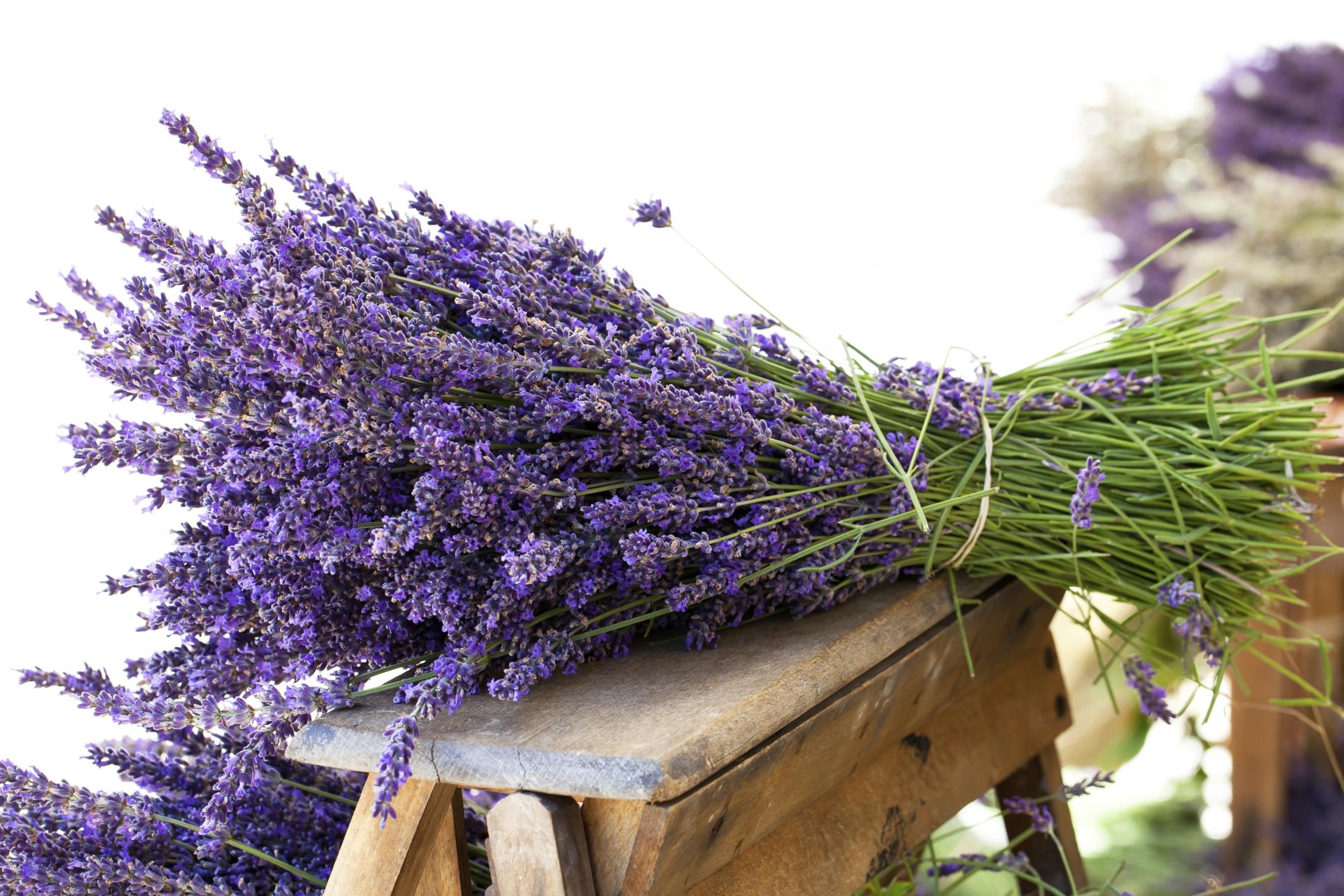 4 modi per utilizzare i fiori di lavanda freschi e secchi - Rami secchi decorativi dove comprarli ...