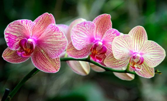 Come curare le orchidee soluzioni di casa - Come curare un orchidea in casa ...