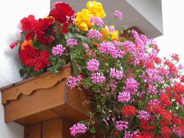 fiori da piantare ad agosto