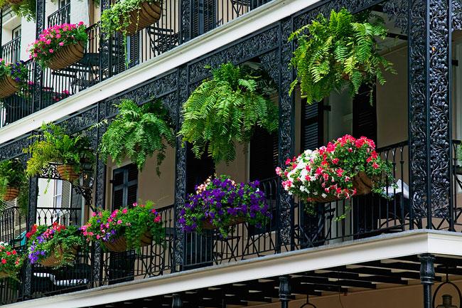 Come scegliere i fiori per il balcone soluzioni di casa for Fiori da balcone perenni