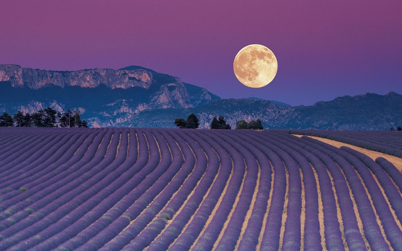 La semina e le fasi lunari soluzioni di casa - Semina pomodori luna ...