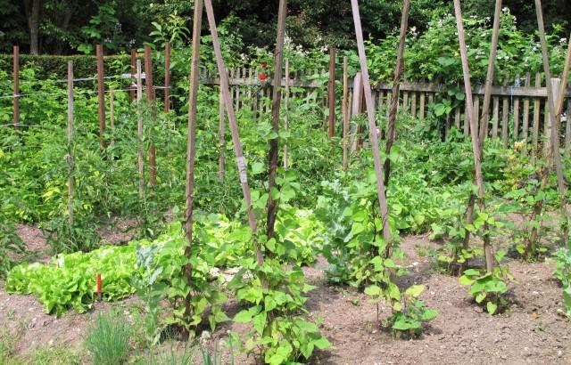 I lavori di settembre nell 39 orto soluzioni di casa for Cosa piantare nell orto adesso