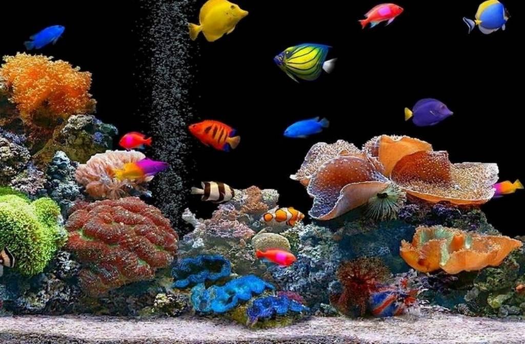 Come prendersi cura dei pesci esotici soluzioni di casa for Sfondi pesci tropicali