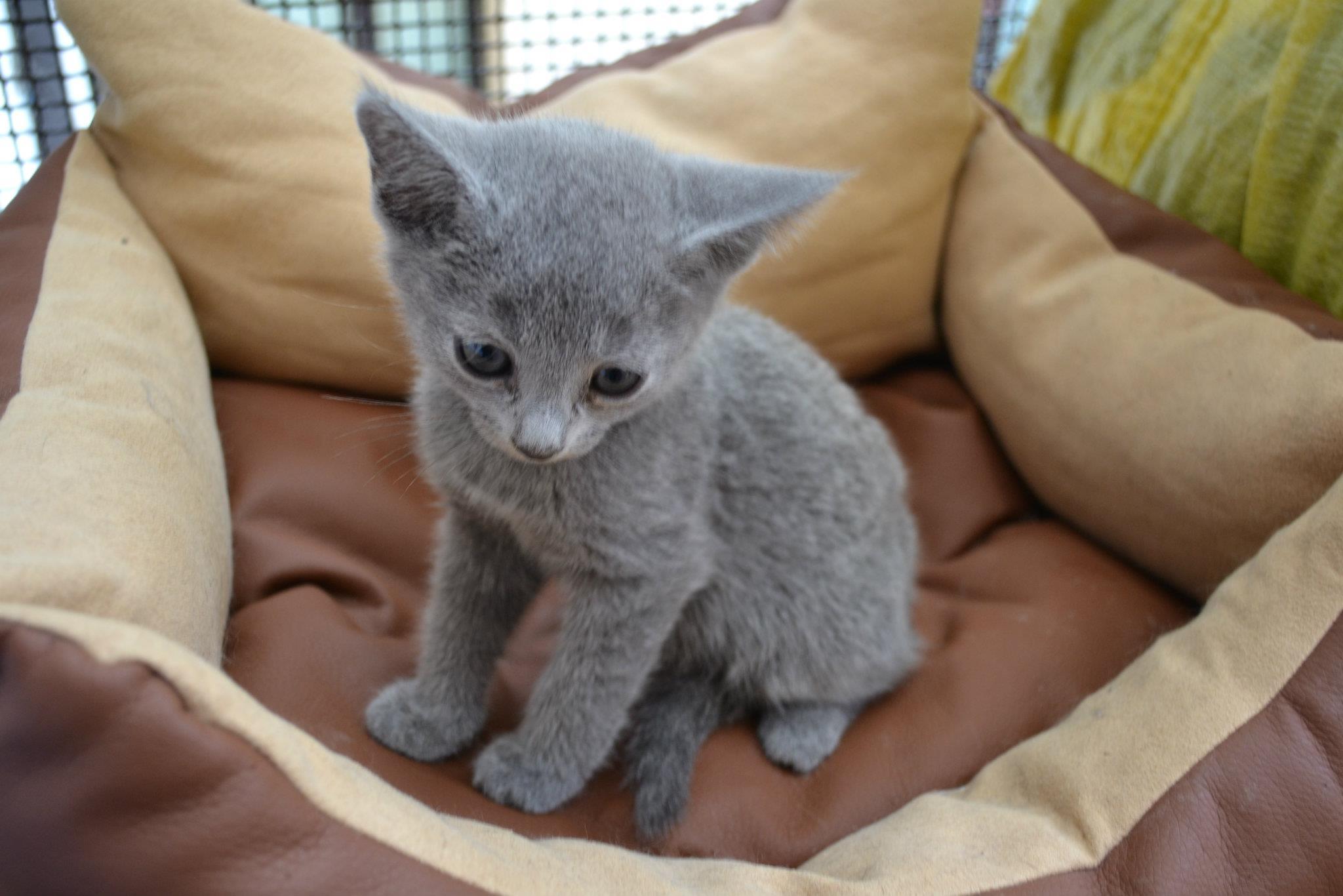 immagini gatti da adottare