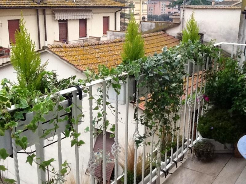 Come preparare il terrazzo per nuove fioriture soluzioni di casa - Piante per il terrazzo ...