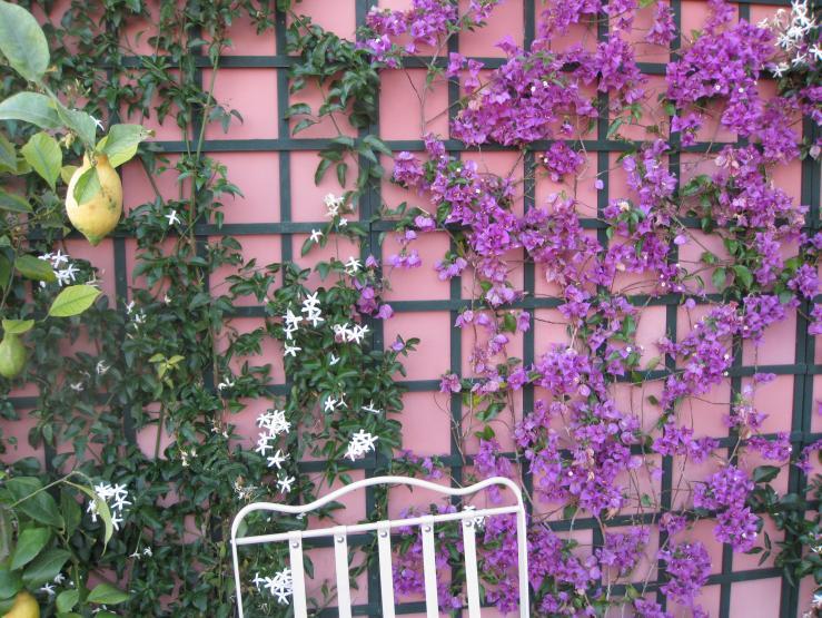 Supporti per piante rampicanti idee per il design della casa for Piante da giardino rampicanti