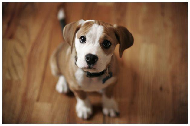 Come tenere un cane in appartamento soluzioni di casa for Cani da tenere in casa