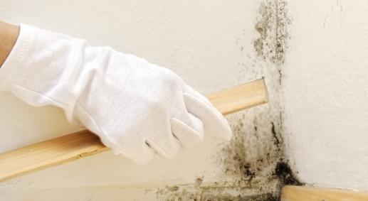 Come prevenire la muffa in cantina - Soluzioni di Casa