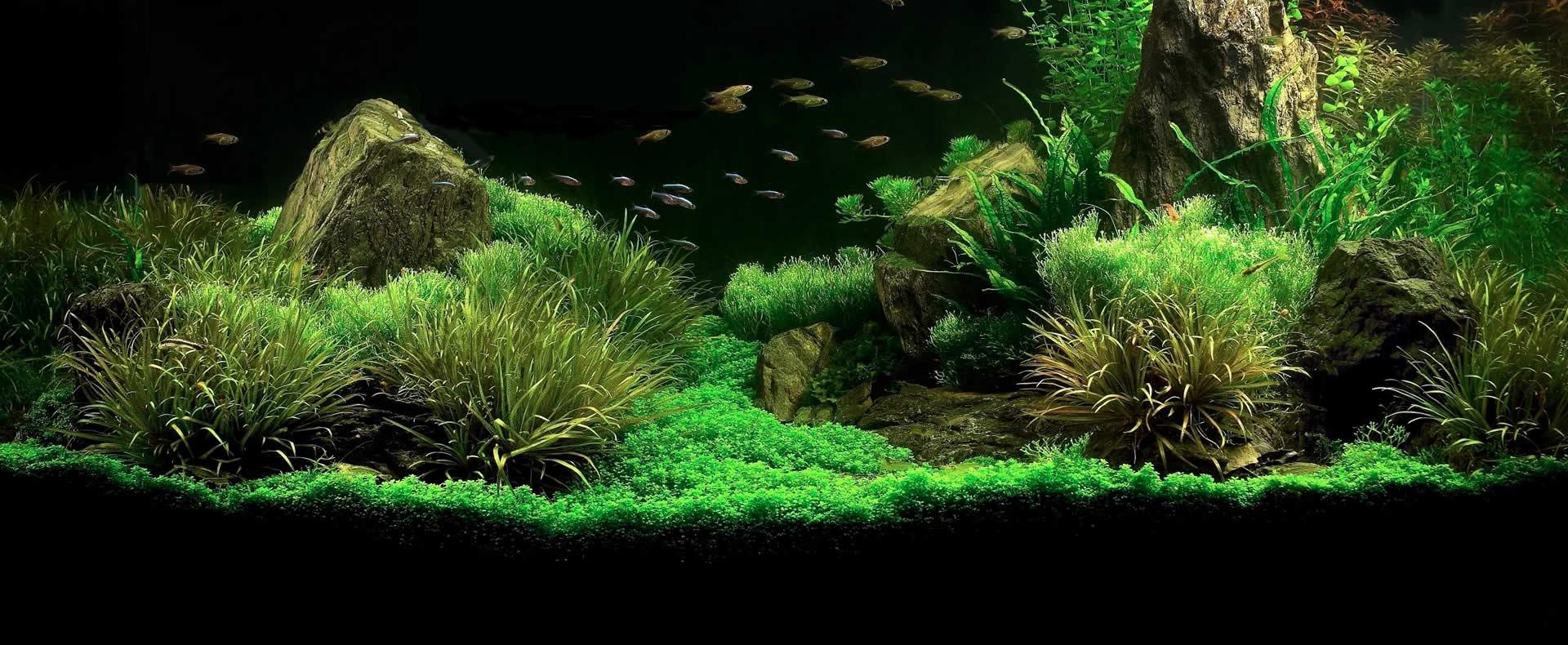 Come realizzare un acquario zen soluzioni di casa for Sabbia per acquario pesci rossi