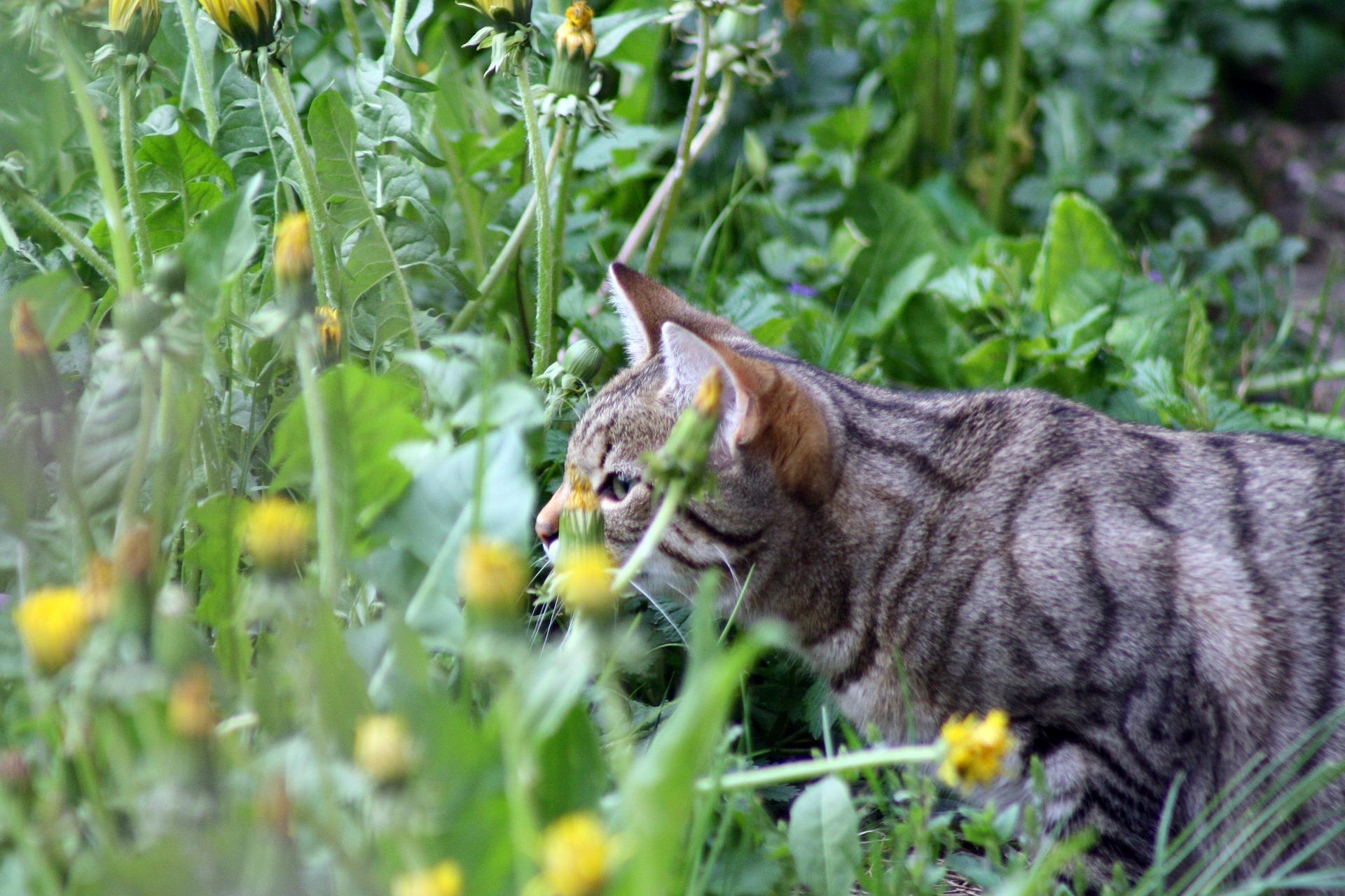 come riconoscere le piante tossiche per i gatti