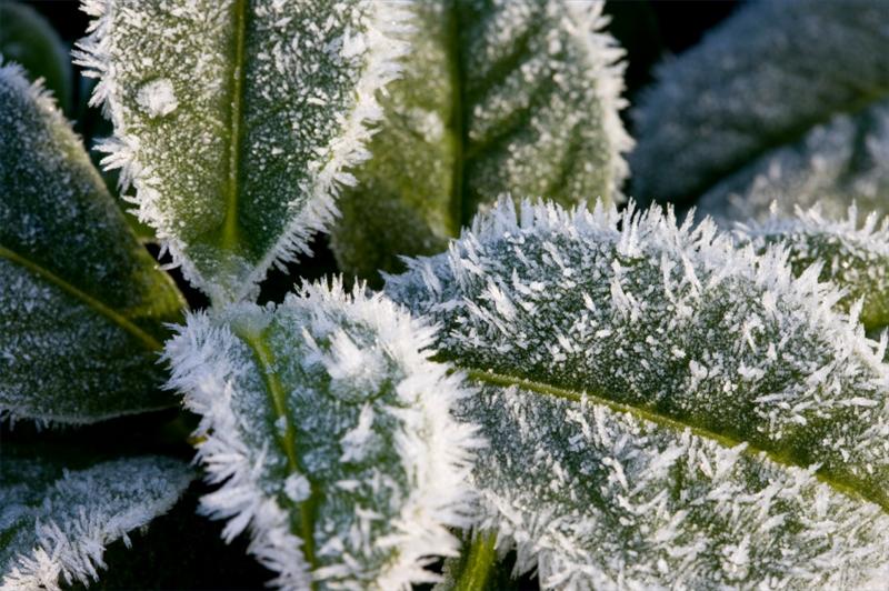 Come curare le piante in inverno soluzioni di casa for Curare le piante
